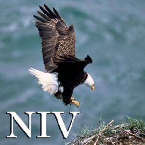 NIV512