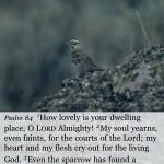 Psalm NIV