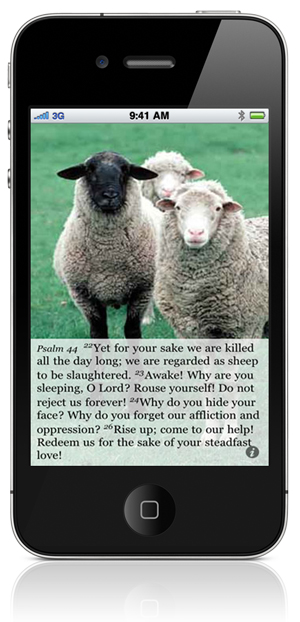 Psalm 44:22 Yet for your sake we are killed all the day long; we are regarded as sheep to be slaughtered. 23 Awake! Why are you sleeping, O Lord? Rouse yourself! Do not reject us forever! 24 Why do you hide your face? Why do you forget our affliction and oppression? 26 Rise up; come to our help! Redeem us for the sake of your steadfast love!